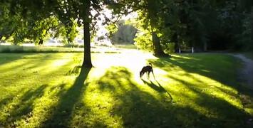 Adieu au langage, la bande-annonce du film en 3D de Jean-Luc Godard