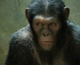 Andy Serkis confirme la suite des origines de La Planète des singes