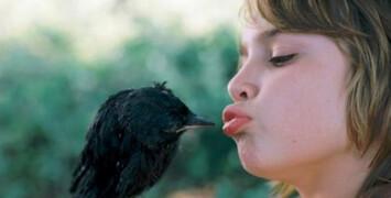 Fais comme l'oiseau : les volatiles au cinéma