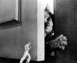 L'Homme qui rétrécit de Richard Matheson à nouveau adapté au cinéma