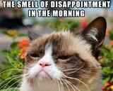 Grumpy Cat va avoir droit à un film