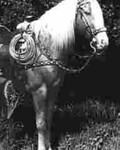 Trigger Le cheval