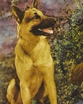Rin Tin Tin Jr.