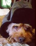 John the Dog