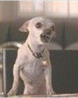 Poppy le chien