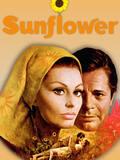 Les Fleurs du soleil