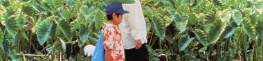 La fantastique année 1999 du Cinéma japonais 日本映画