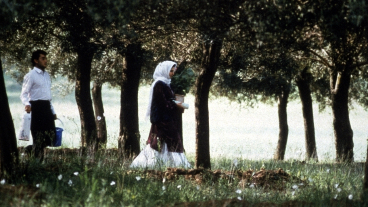 """Résultat de recherche d'images pour """"au travers des oliviers"""""""