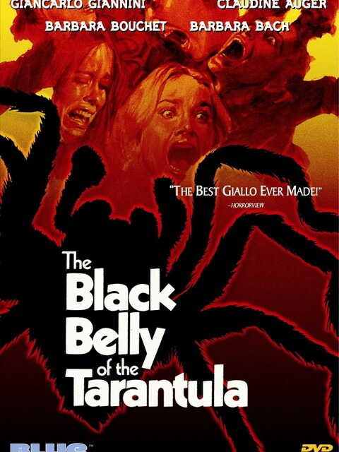 La Tarentule au ventre noir