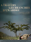 À travers les branches d'un arbre