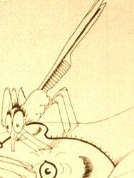 Comment opèrent les moustiques