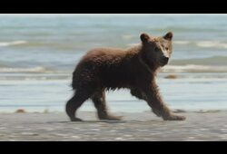 bande annonce de Grizzly