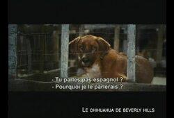 bande annonce de Le Chihuahua de Beverly Hills