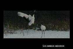 bande annonce de Les Animaux amoureux