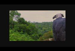bande annonce de Amazonia