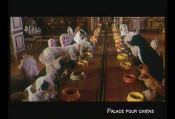 bande annonce de Palace pour chiens