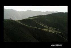 bande annonce de Black Sheep