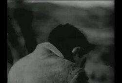 bande annonce de Le Météore de la nuit
