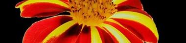 Des titres en fleurs