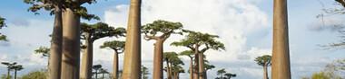Madagascar au cinéma