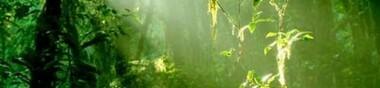 L'appel de la forêt [Chrono]