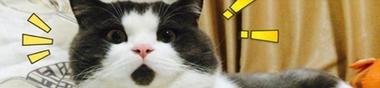 Top 10 des films qui me donnent envie de tuer un chaton !