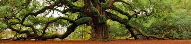 Jardiland : les films les plus appréciés des pousses vertes