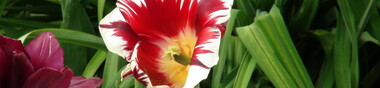 Les documentaires écologiques selon Gattaca