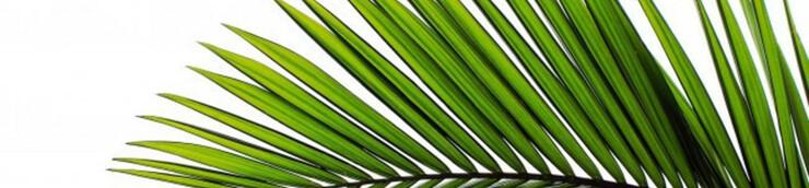 Top 5 des Palmes d'or